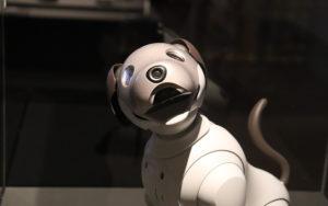 Bien choisir son chien robot